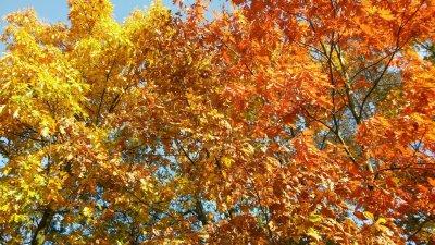w poszukiwaniu jesieni_7